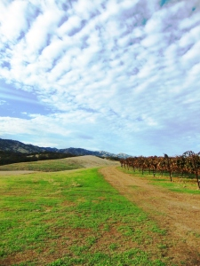 NorCalVineyards,Winters3