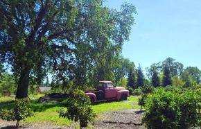 flower farm truck